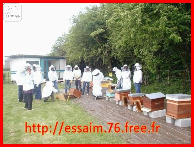 image Cours d'apiculture