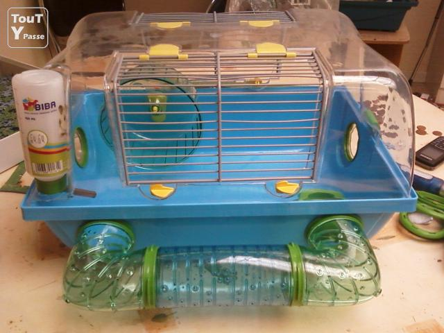 annonce hamsters a vendre cage hamster