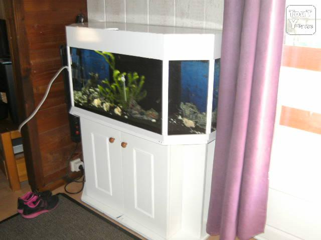 Aquarium philippeville 5600 for Grossiste carpe koi