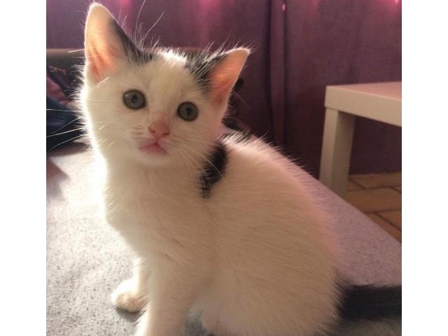 Photo Chatons a donner image 1/4