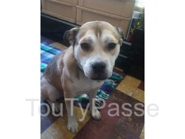 chien a donner Charleroi 6000 - TouTyPasse.be