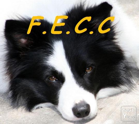 Photo FORMATION EDUCATEUR CANIN image 1/1