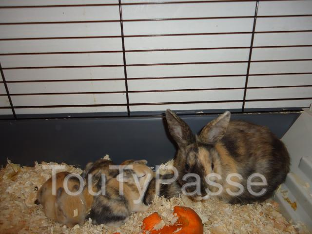 Photo LAPIN PERDU image 1/1