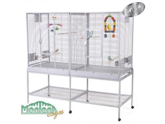 Photo New Madeira Double - perruches cage platinium image 1/3