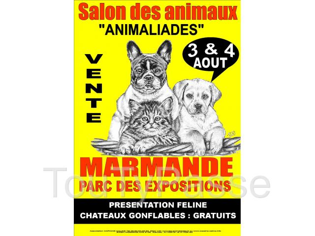 photo de salon du chiot t du chaton 3 et 4 Aout marmande