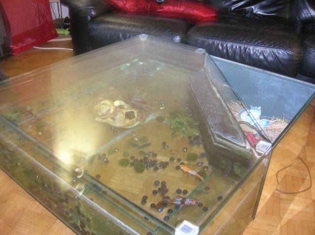 Table de salon aquarium liverdun 54460 for Table salon aquarium