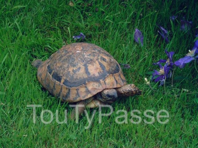 Photo Tortue perdue image 1/3
