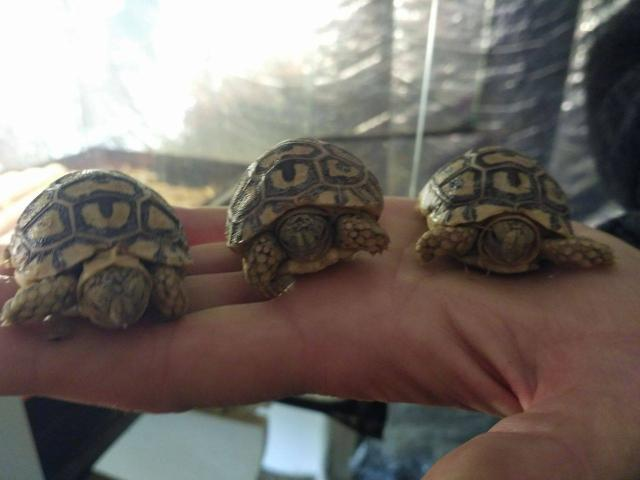 Photo Tortues image 1/2