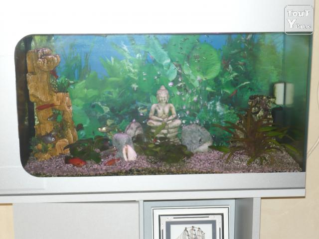 Aquarium 80 litre frameries 7080 for Aquarium 80 litres