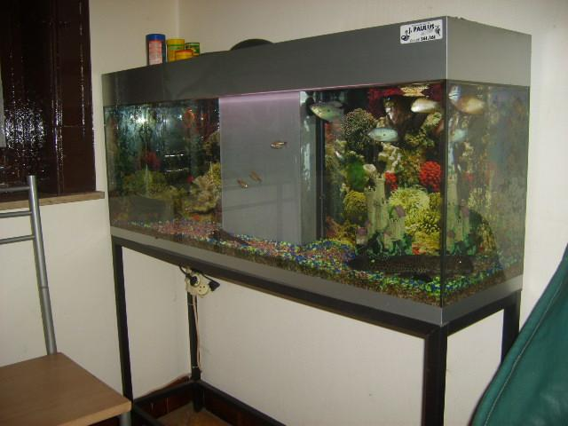 aquarium occasion a vendre. Black Bedroom Furniture Sets. Home Design Ideas