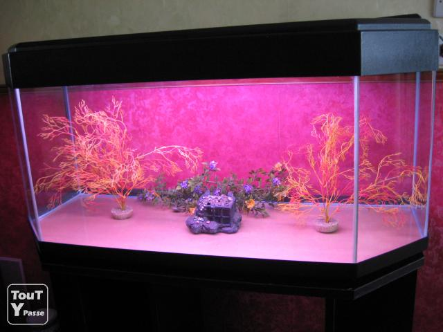 aquarium panoramique 200 litres montigny l s cormeilles 95370. Black Bedroom Furniture Sets. Home Design Ideas