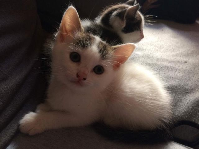 Photo Chatons a donner image 2/4