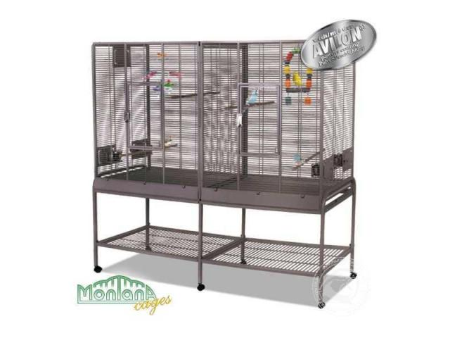 Photo New Madeira Double - perruches cage platinium image 2/3