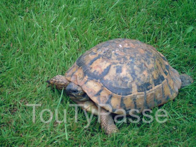 Photo Tortue perdue image 2/3