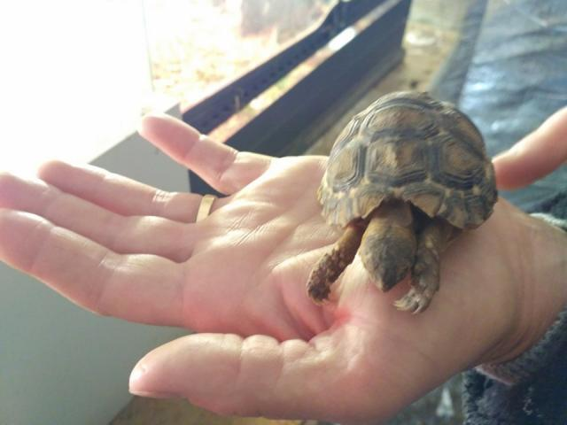 Photo Tortues image 2/2
