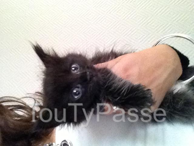 Photo 5 chaton as donner image 3/5