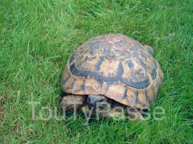 Photo Tortue perdue image 3/3