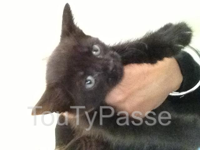 Photo 5 chaton as donner image 4/5