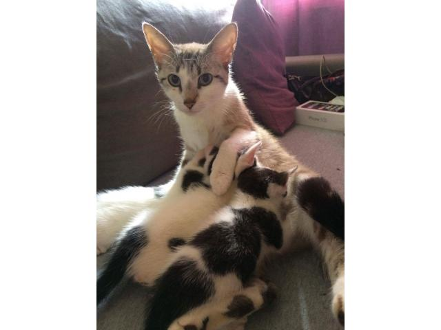 Photo Chatons a donner image 4/4