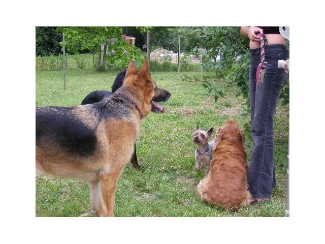 Photo Garde chiens familiale image 4/6