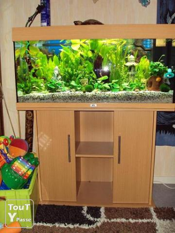 aquarium rio 180 juwel discus ch teauroux 36000. Black Bedroom Furniture Sets. Home Design Ideas