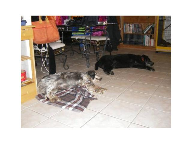 Photo Garde chiens familiale image 5/6